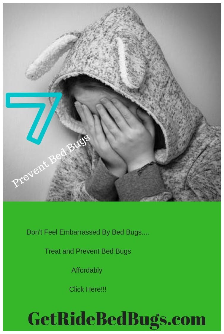 How To Get Rid Of Bed Bugs For Good Fast