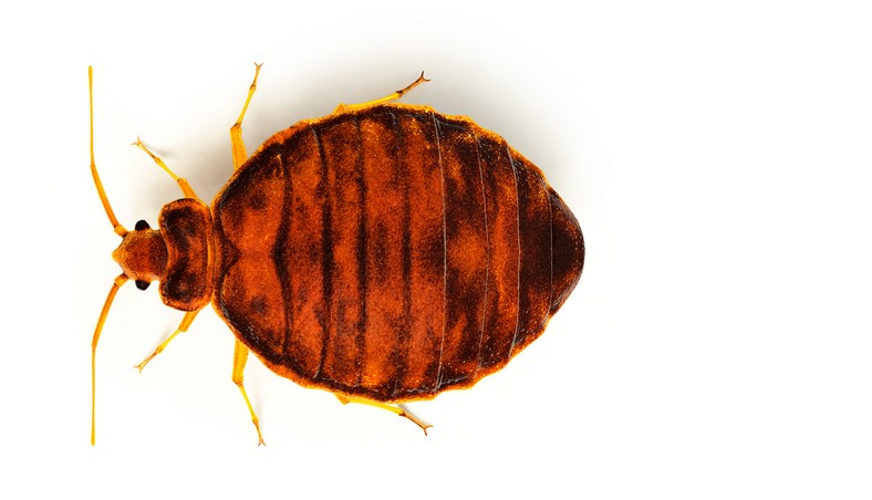 How To Get Rid Of Bed Bugs In Mobile Home