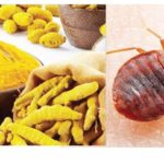 How To Kill Bed Bugs At Home?