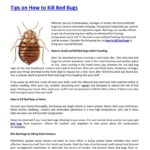 How To Kill Bed Bugs At Home Pest Control?