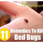 Killing Bed Bug Eggs Cold