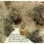 Prices To Get Rid Of Bed Bugs