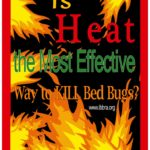 The Fastest Way To Get Rid Of Bed Bugs