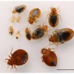 Washing Clothes After Bed Bugs
