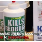 Ways To Kill Bed Bugs Using Household Items?