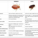 What Can I Use To Get Rid Of Bed Bugs?