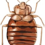 What Chemicals Do Exterminators Use For Bed Bugs?