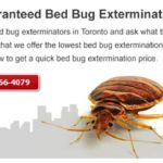 What Gets Rid Of Bed Bugs Fast?