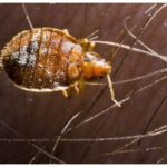 What Kills Bed Bugs On Contact?
