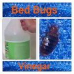 What Spray Is Good For Bed Bugs?