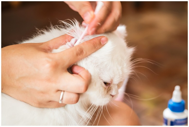 How To Get Rid Of Mites On Dogs And Cats