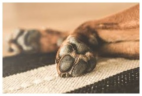 How To Get Rid Of Mites On Dogs Tail