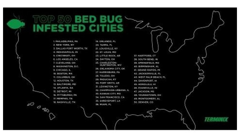 Baltimore Bed Bug Professionals