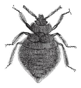 Baltimore Bed Bugs Hotels