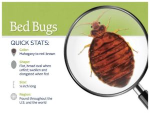 Bed Bug Remedies For Skin