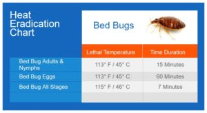 Best Steam Cleaner For Killing Bed Bugs