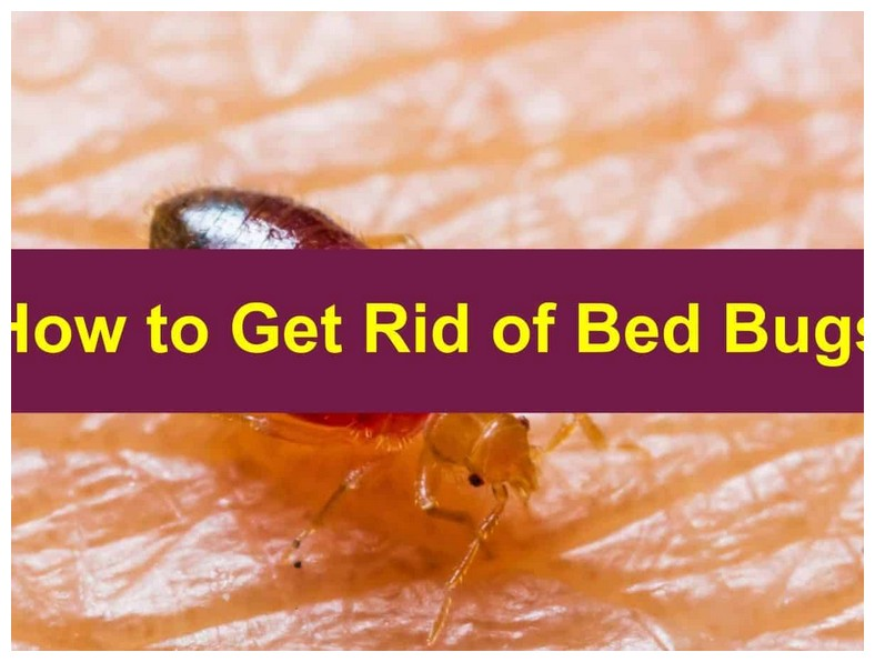 Best Way To Get Rid Of Bed Bugs