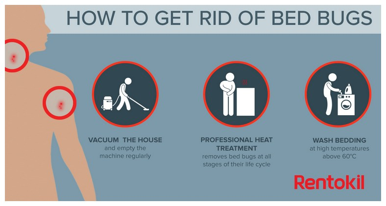 Can You Get Rid Of Bed Bugs Permanently