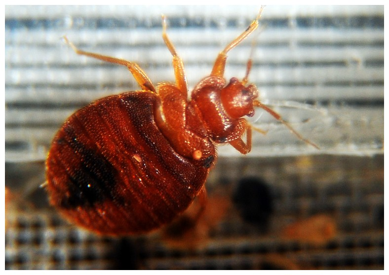 Chemicals That Kill Bed Bugs And Eggs