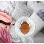 How Do You Get Rid Of Bed Bugs Permanently?