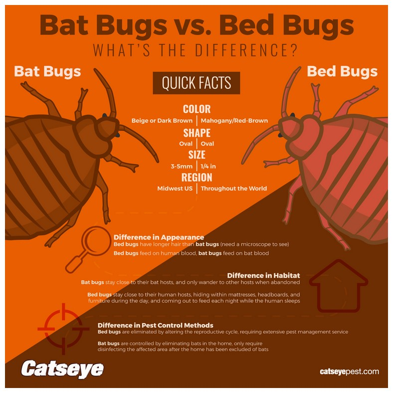 How To Eliminate Bed Bugs For Good