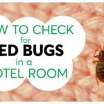 How To Kill Bed Bugs With Heat In The Dryer?