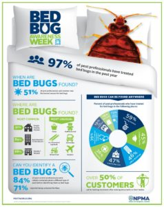 How To See Bed Bugs On Luggage