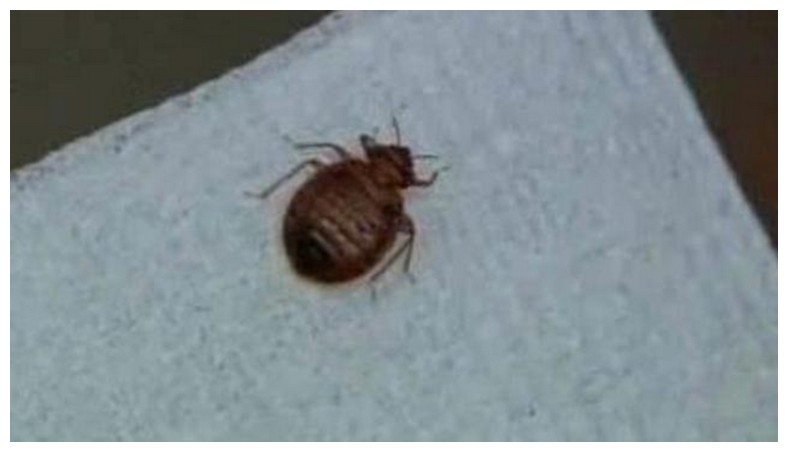 Orkin Bed Bugs Columbus