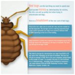 Remedy For Bed Bugs Bite