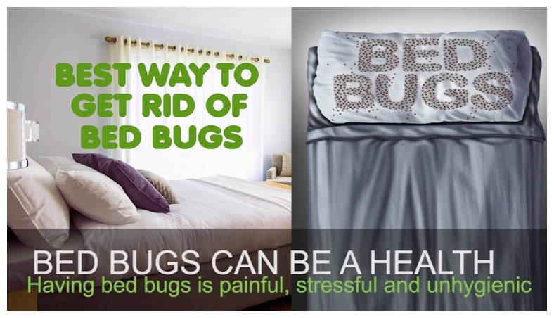 Ways To Get Rid Of Bed Bugs For Good