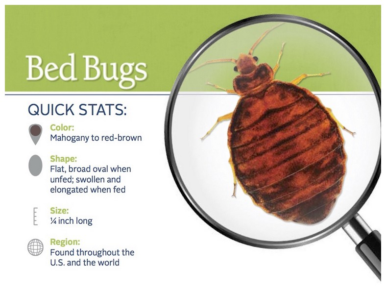 What Do Bed Bug Bites Do To You