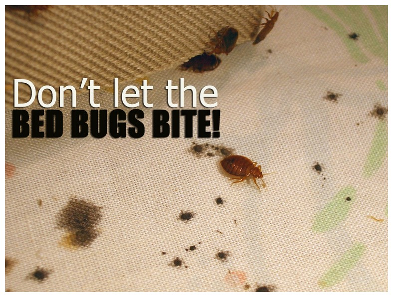 What Do Bed Bugs Do After They Bite You