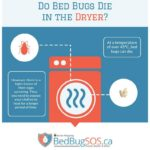 What Kills Bed Bugs And Their Eggs?