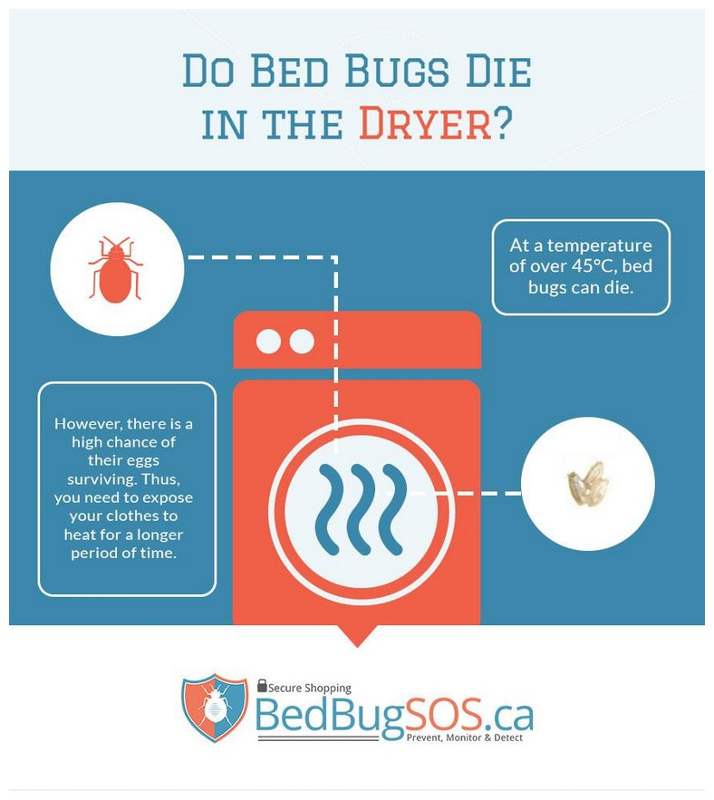 What Kills Bed Bugs And Their Eggs