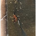 What Kills Bed Bugs Instantly Heat?