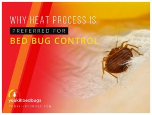 What Will Kill Bed Bugs Instantly