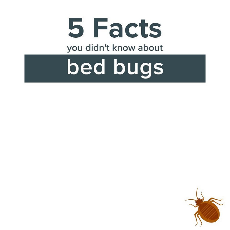 All Facts About Bed Bugs