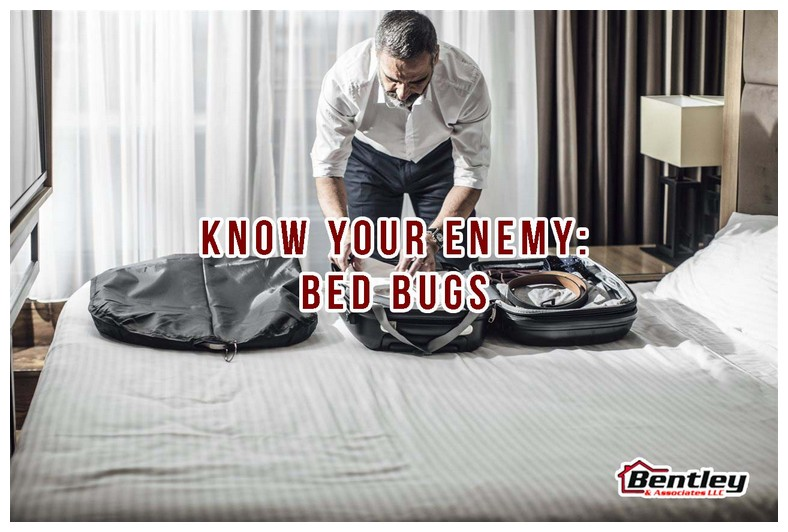 Bed Bug Bags For Mattresses