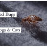 Bed Bugs How To Get Rid Of Bites