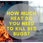 Best Way To Get Rid Of Bed Bugs Diy