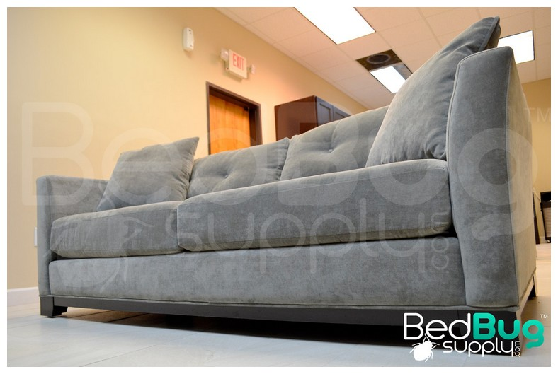 Best Way To Get Rid Of Bed Bugs In Carpet
