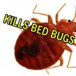 How Do You Get Rid Of Bed Bugs In Your House?