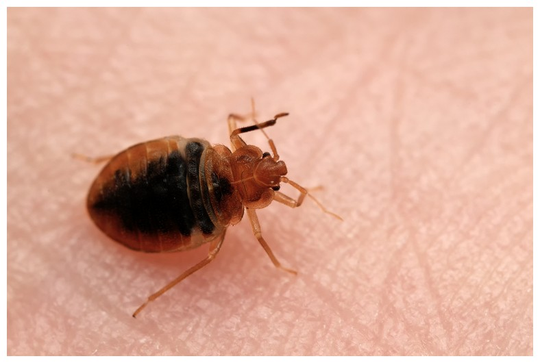 How Do You Have Bed Bugs In Your House