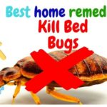 How Hot To Kill Bed Bugs?