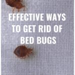 How To Get Rid Of Bed Bugs Easy And Fast?