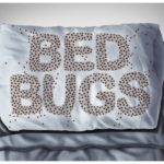 How To Get Rid Of Bed Bugs In Empty House?