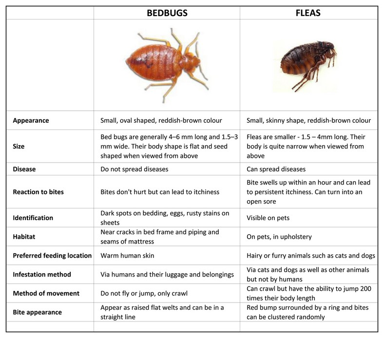 How To Repel Bed Bugs
