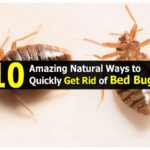 How To Rid Bed Bugs?