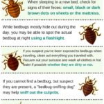 Images Of Bed Bugs On Mattress