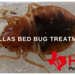 Is There Any Home Remedies To Kill Bed Bugs?